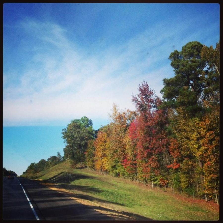 truck drivers picture of the tree-lined open road in autumn