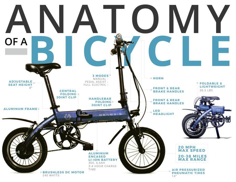 Anatomy-B1-Blue.jpg