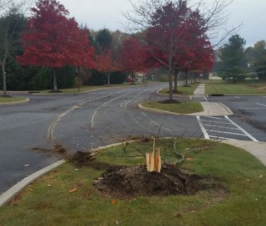 Truck driver fells 30-foot tree, drags it 2 miles, police say