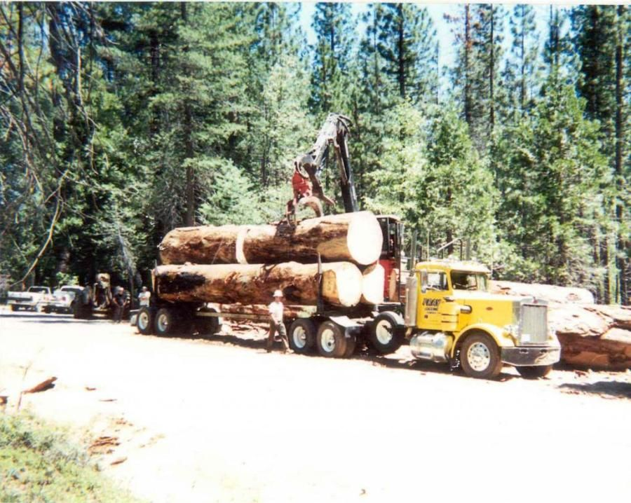 logging truck being loaded with giant logs