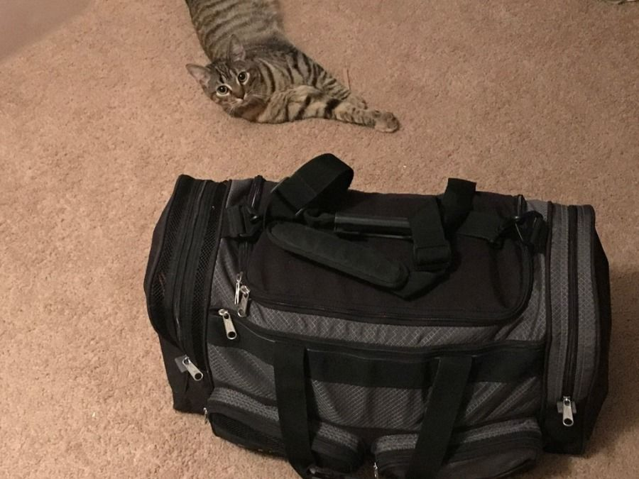 truck drivers duffle bag packed to go to CDL training and his cat