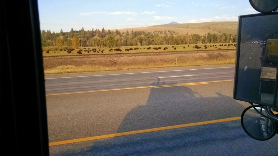 picture looking out truck driver's window at bison in an open field