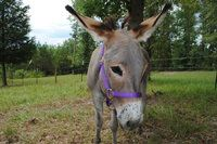 One of my Donkeys