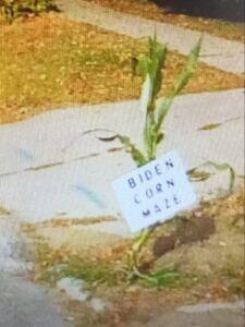 Biden corn maze