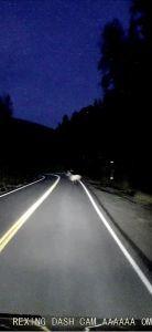 Elk on road