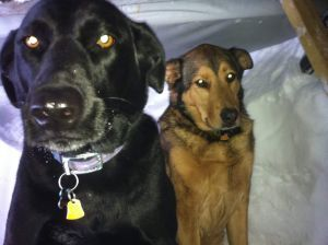 My late dog-children...