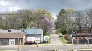 MONSTER Lilac in Birmingham, AL
