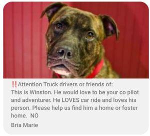 Truck dog needs a Pilot