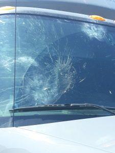 Bird hit