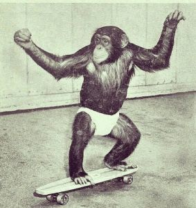 Knuckle dragging primate on a skateboard
