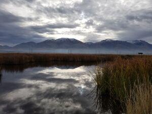 Bear River Migratory Bird Refuge.