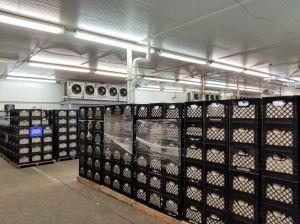 Stacked milk crates