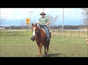 Cowboy in the saddle on Honcho